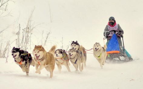 sled dog race in Karelia